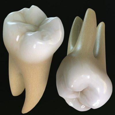 Răng khôn có mấy chân?
