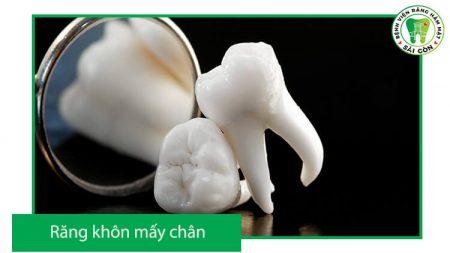 răng khôn có mấy chân