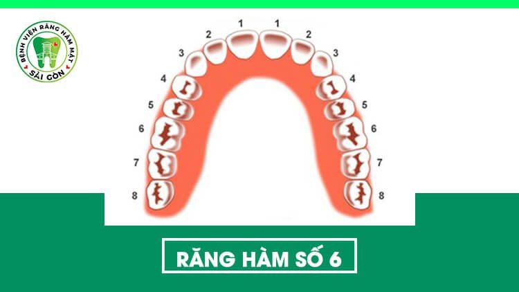 răng hàm số 6